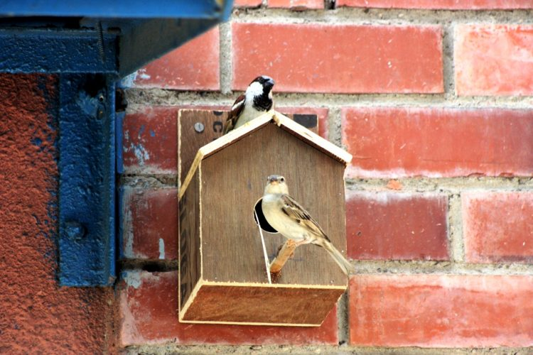 Sparrow Bird Houses